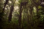 Costarica-nebelwald