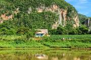 Kuba-vinales-tabakplantage